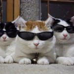 Cats_in_shades